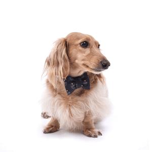 Laço/Gravata Pet Escudo - Preto