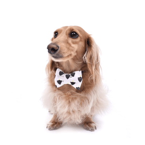 Laço/Gravata Pet Escudo - Branco
